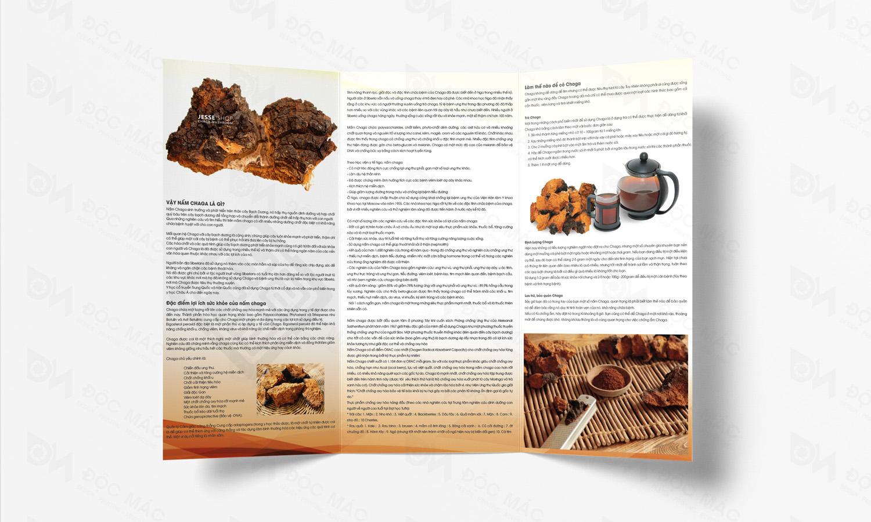 Brochure nhận diện thương hiệu Nấm Chaga